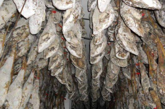 ¿Son perjudiciales los mohos del jamón para la salud?